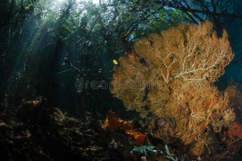 A passagem, ampat de Raja, Indonésia 04 fotografia de stock royalty free