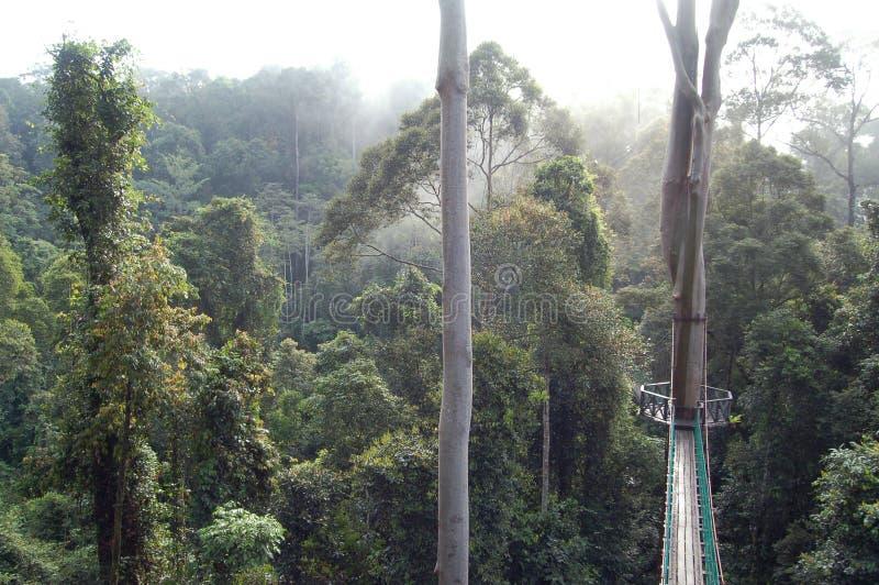 Passagem Bornéu do dossel do vale de Danum fotografia de stock royalty free