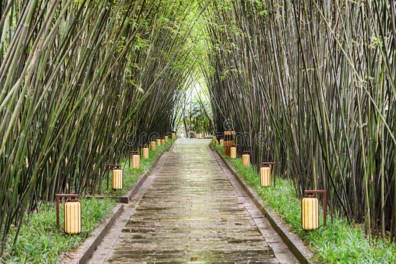 Passagem cênico através das madeiras de bambu após a chuva Trajeto entre árvores foto de stock