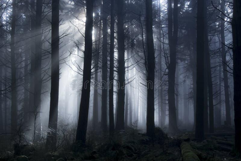 Passagem clara através das árvores durante um dia nevoento nas madeiras fotografia de stock royalty free