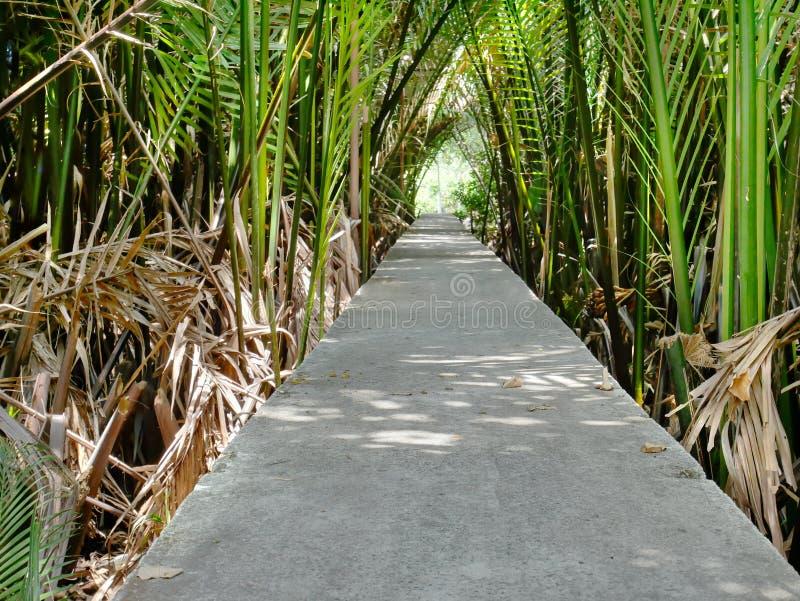 Passagem concreta através das folhas e dos ramos da palmeira imagem de stock royalty free