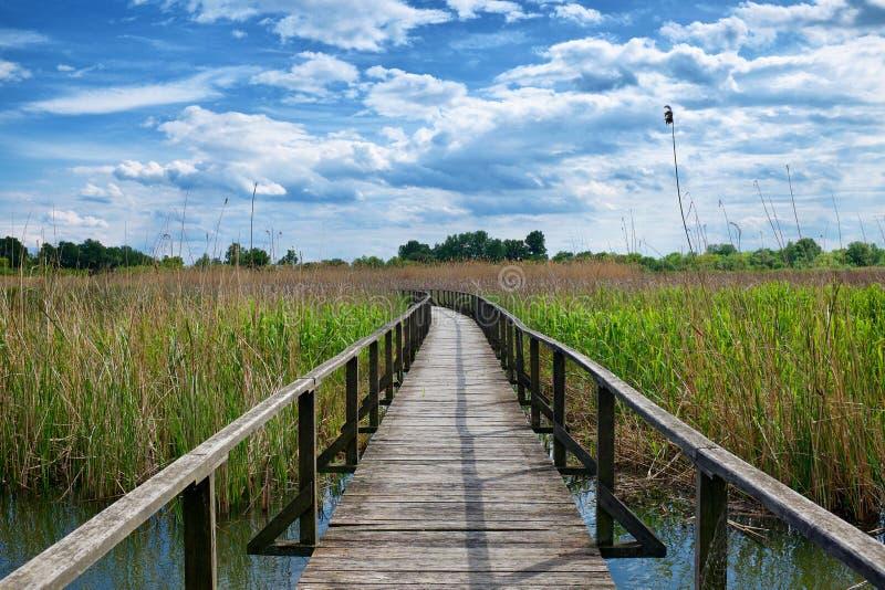 Passagem de madeira dentro no lago Tisza em Hungria fotos de stock royalty free