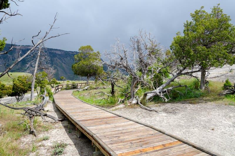 Download Passagem Em Mammoth Hot Springs Foto de Stock - Imagem de naturalizado, mammoth: 29843806