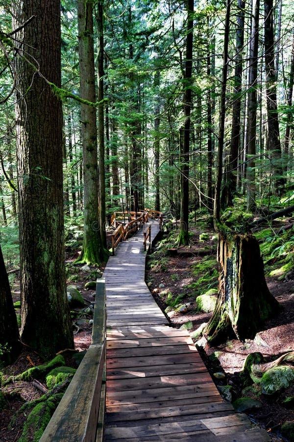 Passagem de madeira em uma fuga de caminhada fotos de stock royalty free