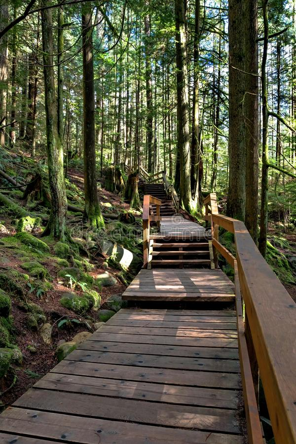 Passagem de madeira em uma fuga de caminhada imagens de stock royalty free