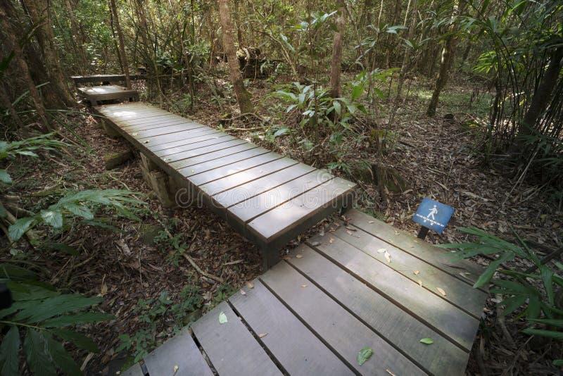 Passagem de madeira na floresta foto de stock