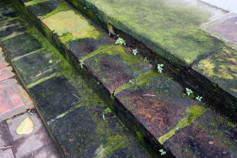 Passagem de pedra das escadas com folha imagem de stock royalty free
