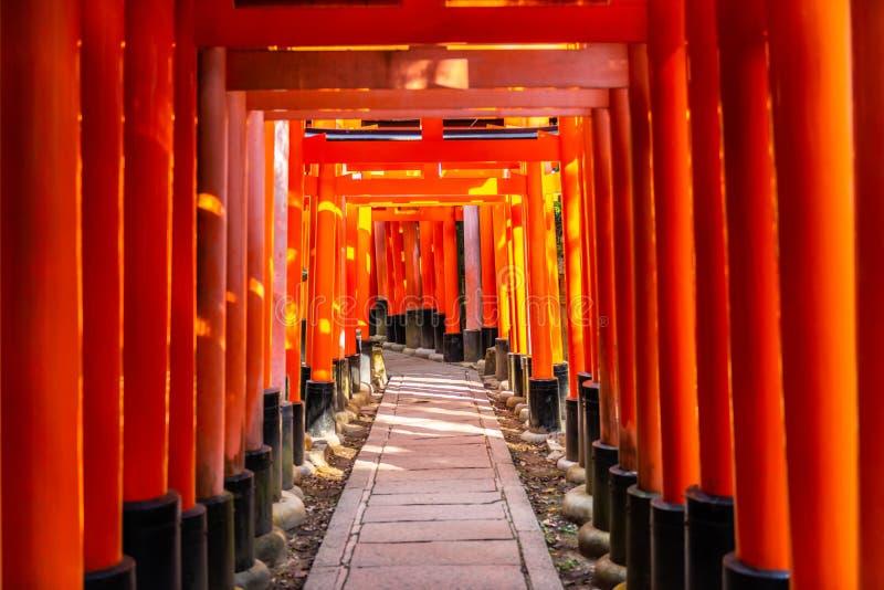 passagem de portas de Torii no santuário com feixes do sol, lugar famoso de Fushimi Inari Taisha do turista em Japão, Kyoto fotos de stock royalty free