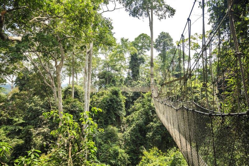 Passagem do dossel no parque nacional de Kakum, Gana, África ocidental fotos de stock