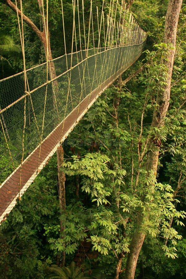 Passagem do dossel, Taman Negara, Malásia fotos de stock