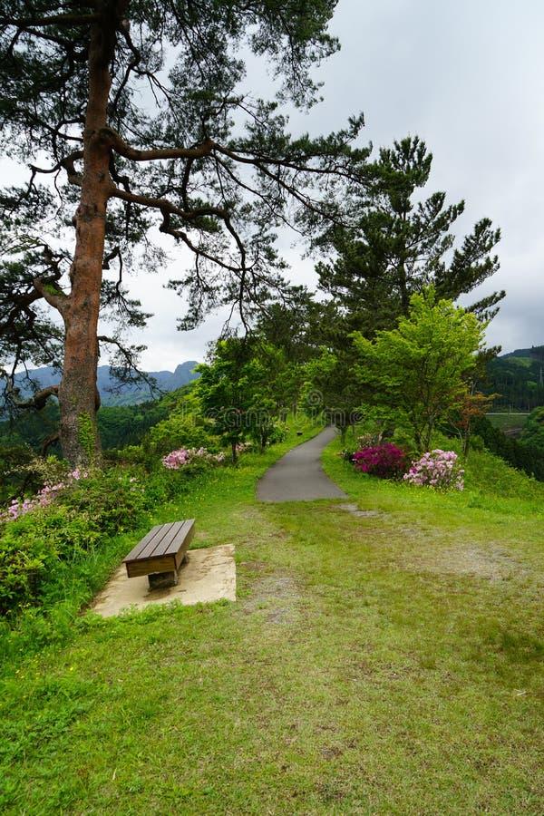 Passagem e bancos entre árvores verdes e grama no japonês gard fotos de stock