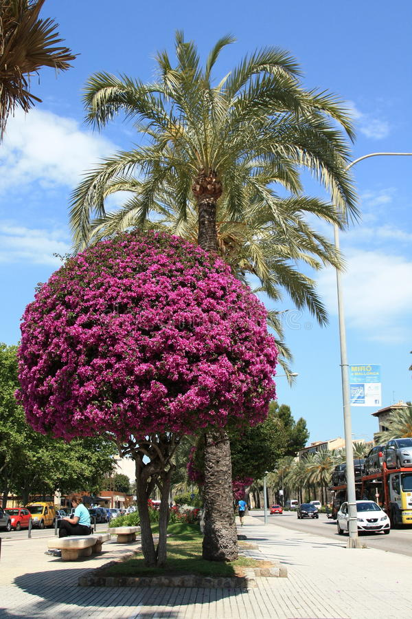 Passagem em Palma de Mallorca fotografia de stock