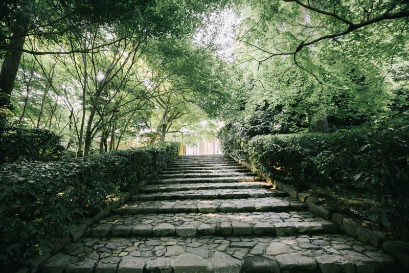 A passagem japonesa do jardim com árvore sae do estilo do vintage do filme foto de stock