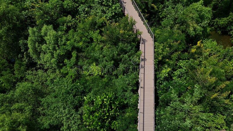 Passagem na floresta na vista aérea imagem de stock royalty free