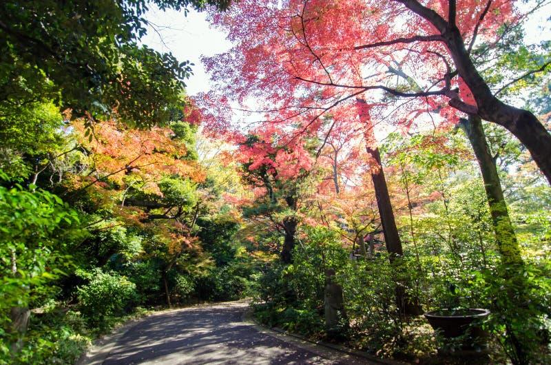 Passagem no jardim japonês, Tóquio, Japão imagem de stock