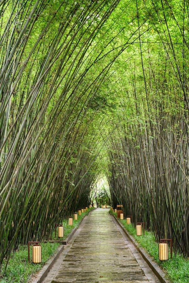 Passagem obscuro de surpresa através das madeiras de bambu após a chuva foto de stock