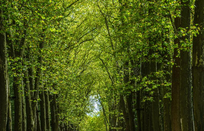 Passagem, pista, trajeto com as árvores verdes na floresta fotos de stock