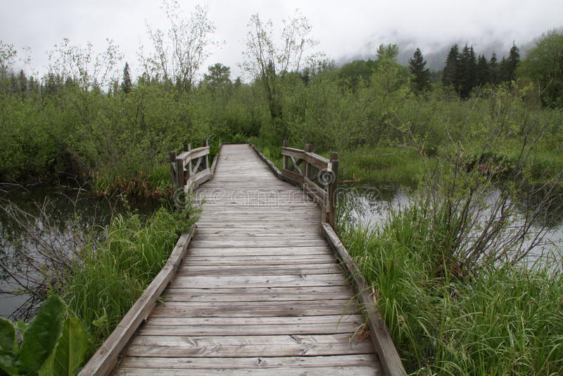 Passagem sobre a terra do pântano imagem de stock royalty free