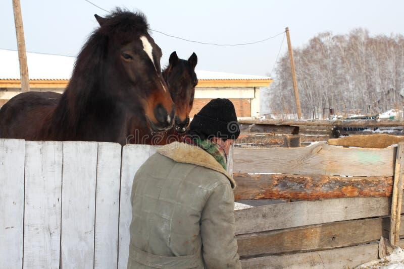 Passagens do trabalhador de exploração agrícola pelo prado com os dois cavalos na vila foto de stock royalty free