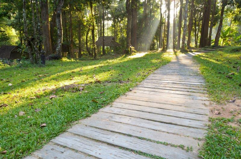 Passages in bos stock afbeeldingen