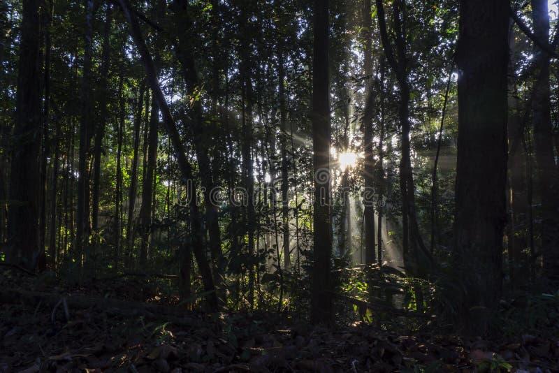 Passages de lever de soleil de matin par la forêt photographie stock