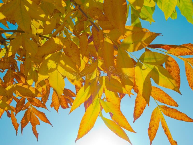 Passaggi di luce solare tramite i fogli di autunno fotografia stock libera da diritti