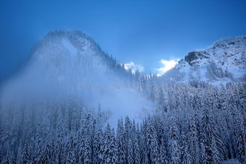 Passaggio innevato Washington di Snoqualme dei sempreverdi della montagna della nebbia fotografie stock