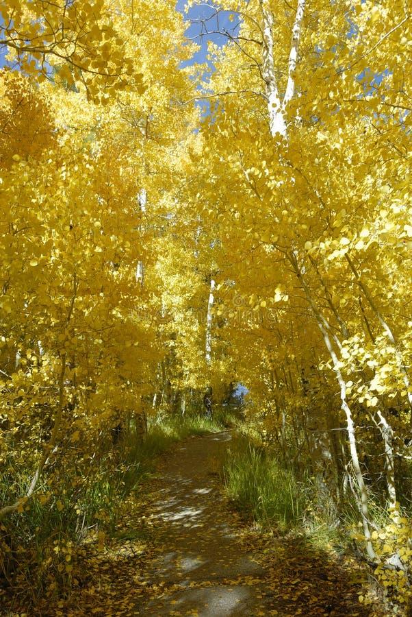 Passaggio pedonale attraverso le tremule in autunno fotografie stock libere da diritti