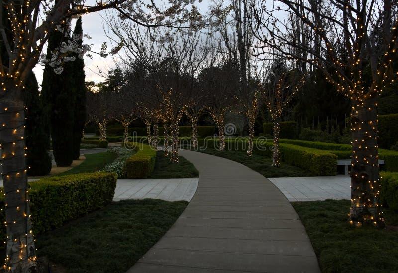 Passaggio pedonale con gli alberi con le luci leggiadramente fotografia stock