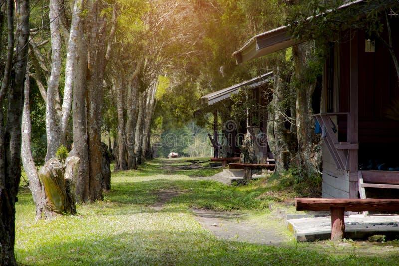 Passaggio pedonale con l'albero all'iarda anteriore, scena della natura di bellezza fotografia stock