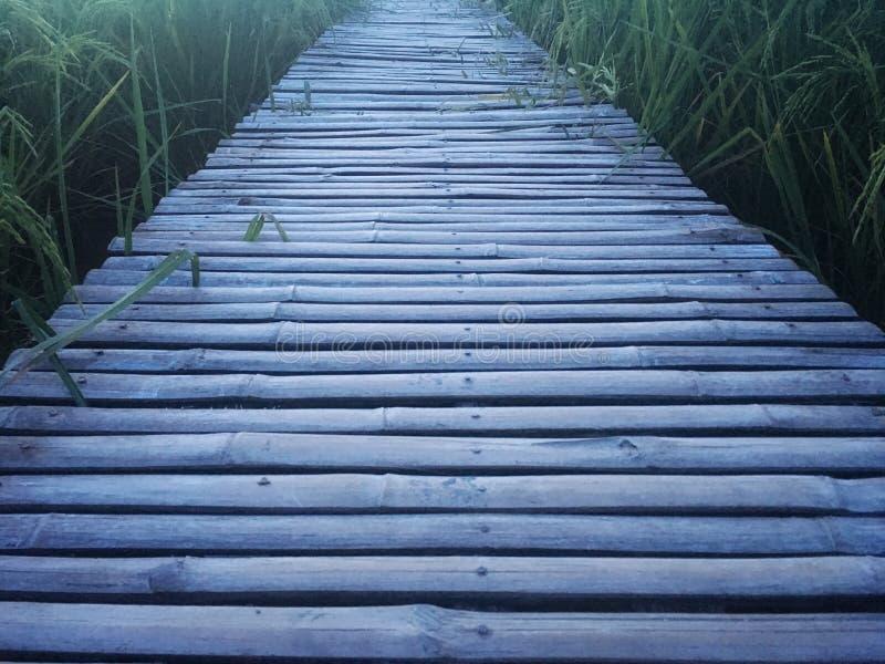Passaggio pedonale di legno fatto da di bambù ed unito asciutti dal chiodo Il modo passa diritto attraverso il giacimento del ris fotografia stock libera da diritti