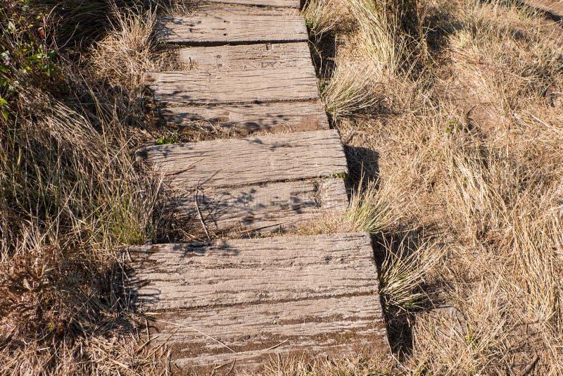 Passaggio pedonale di legno sulla terra fra erba asciutta fotografia stock libera da diritti