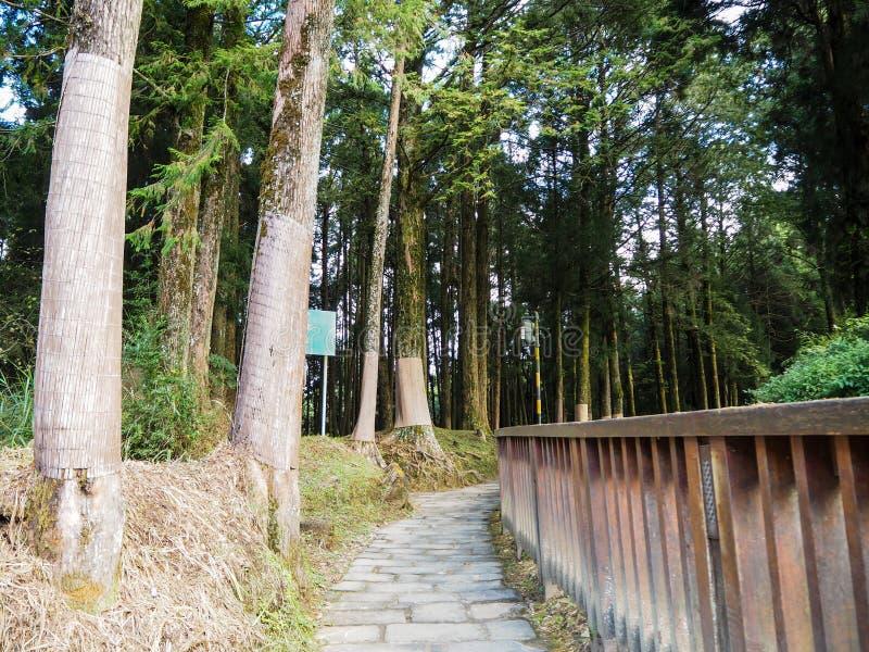Passaggio pedonale fra gli alberi fotografia stock libera da diritti