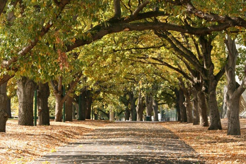 Passaggio pedonale, giardini di Carlton, Melbourne, Australia immagini stock libere da diritti