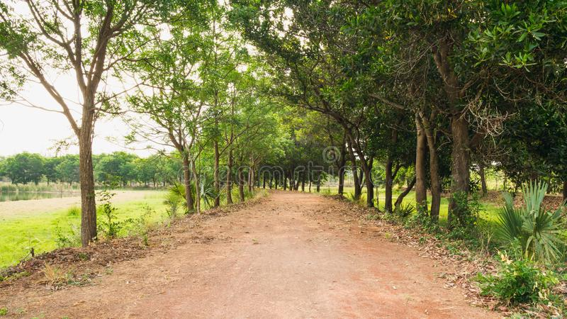 Passaggio pedonale naturale della foresta verde alla luce di giorno soleggiato fotografia stock libera da diritti