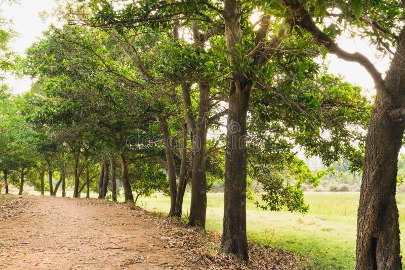 Passaggio pedonale naturale della foresta verde alla luce di giorno soleggiato fotografia stock