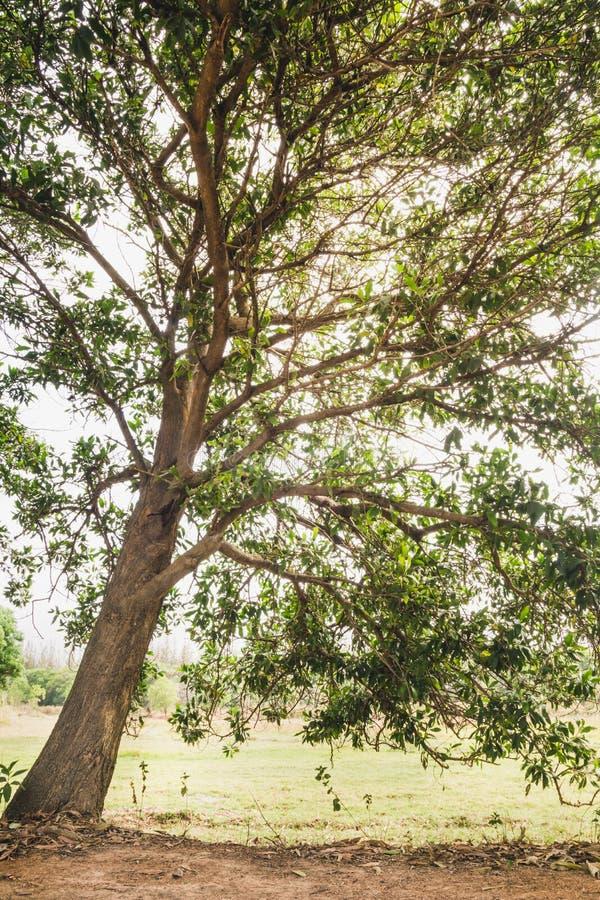 Passaggio pedonale naturale della foresta verde alla luce di giorno soleggiato fotografie stock libere da diritti