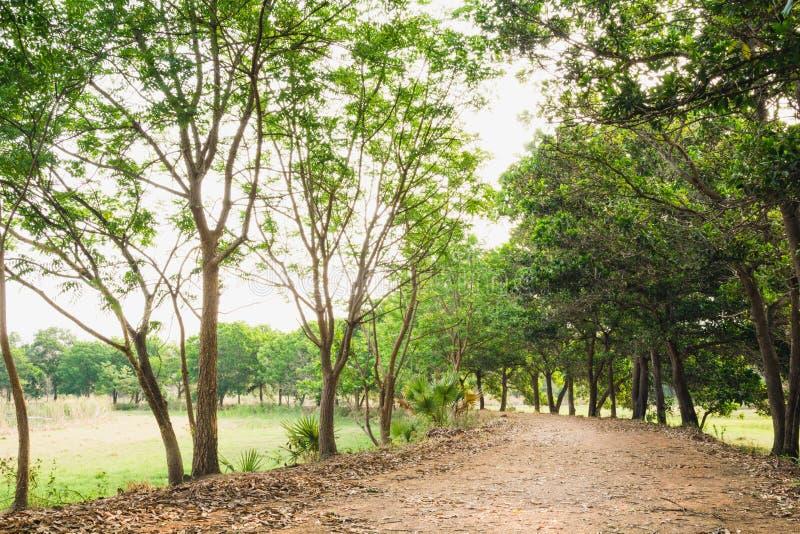 Passaggio pedonale naturale della foresta verde alla luce di giorno soleggiato fotografie stock
