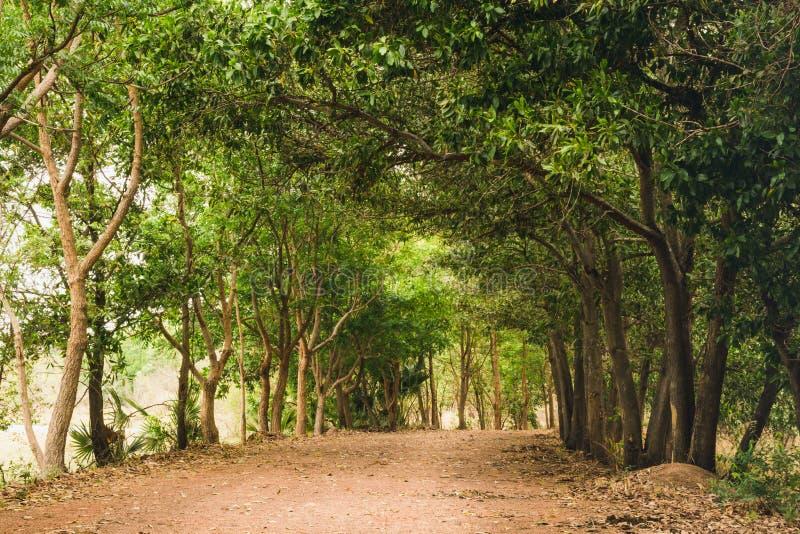 Passaggio pedonale naturale della foresta verde alla luce di giorno soleggiato immagini stock libere da diritti