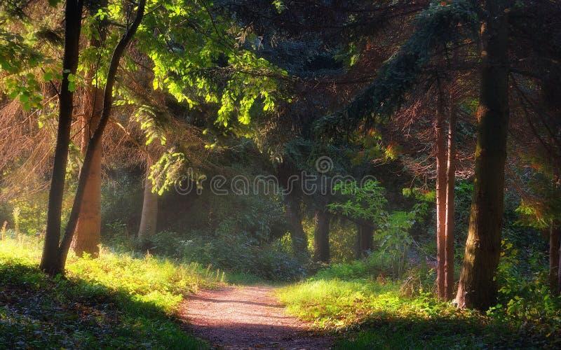 Passaggio pedonale nel giardino fotografia stock libera da diritti