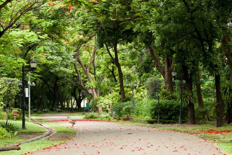Passaggio pedonale nel giardino immagine stock