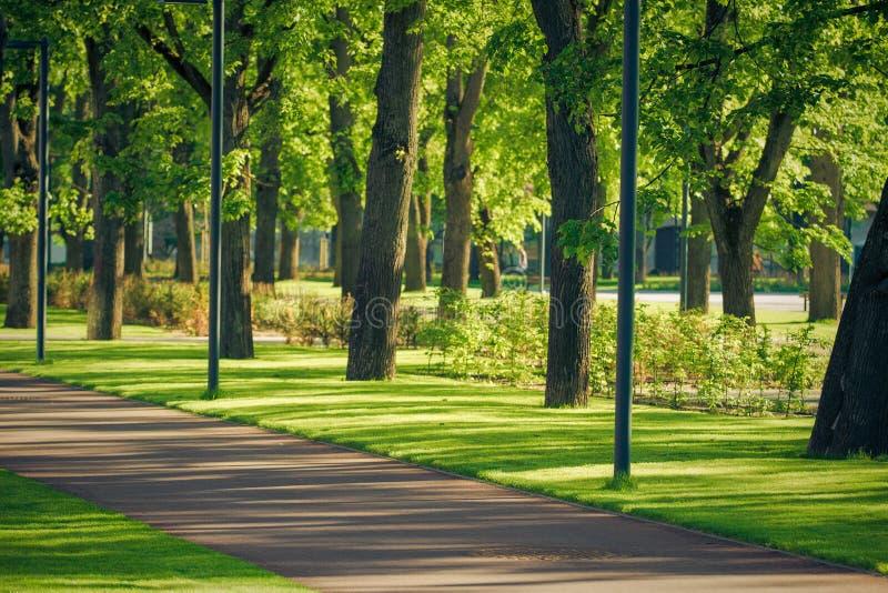Passaggio pedonale nel parco pubblico Strada vuota della bicicletta nel parco della città fotografia stock libera da diritti