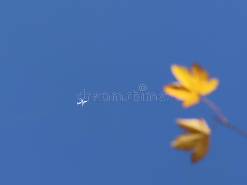 Passagierpassagierflugzeug fliegt hoch in den blauen Himmel Entwirrtes gelbes Laub des Herbstes auf einem Baum auf einer Bestrafu stockfotos
