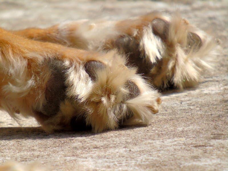 Passande hund royaltyfria foton
