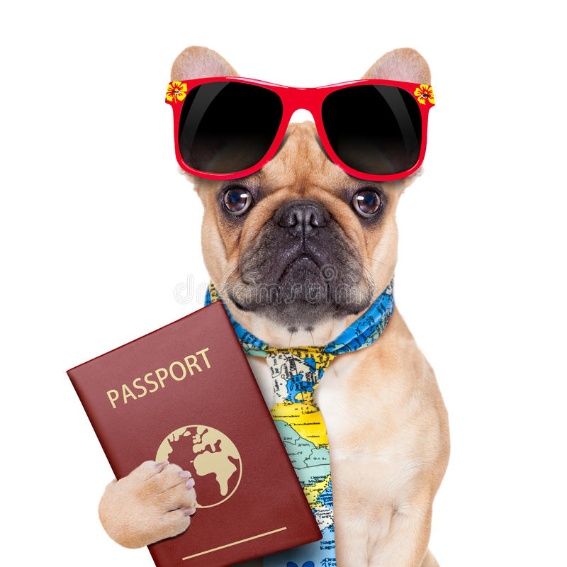 Passaporte do cão imagens de stock