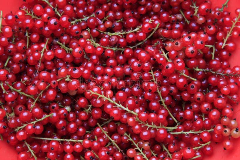 Download Passas De Corinto Vermelhas Imagem de Stock - Imagem de culinary, heap: 10052647