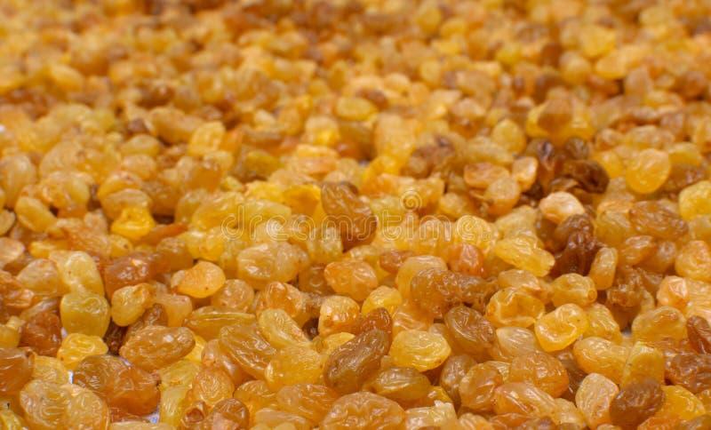 Passas de uvas maduras foto de stock