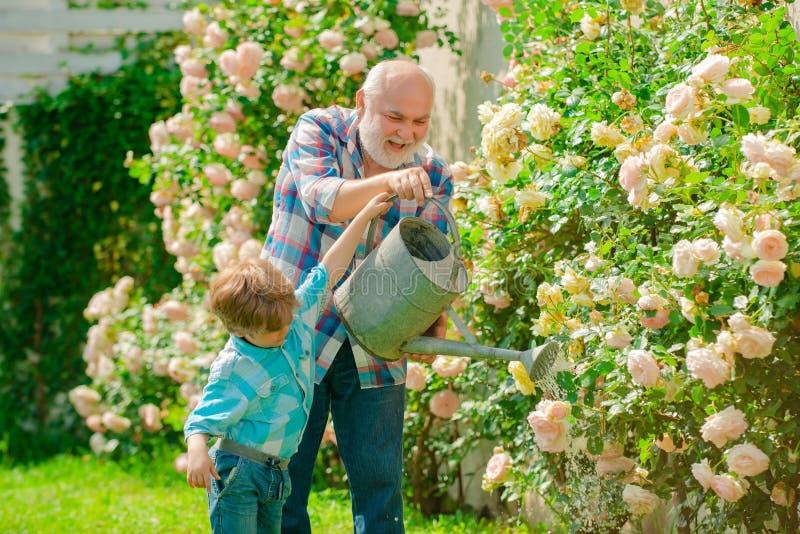 Passe-temps de jardinage Le petit-fils et le grand-père passent le temps dans le verger Fleurs de arrosage dans le jardin images libres de droits