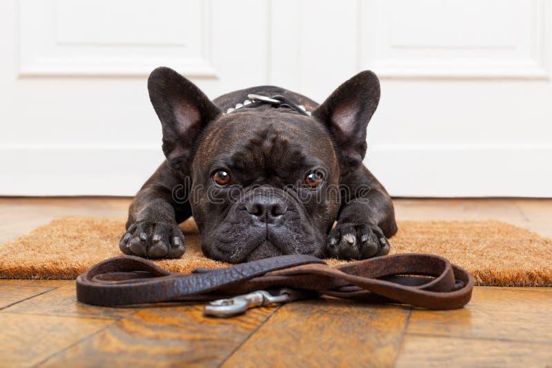 Passeggiata aspettante del cane immagini stock libere da diritti