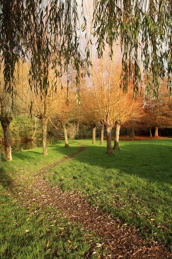Passeggiata autunnale attraverso un parco in Vitre Francia immagini stock libere da diritti